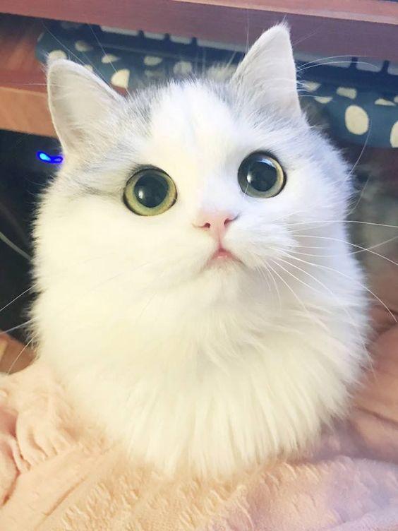 anh-meo-cute-de-thuong-ngo-nghinh